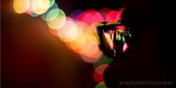 22 ví dụ về Bokeh trong nghệ thuật nhiếp ảnh