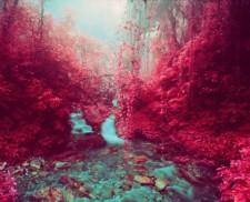 Sự kì diệu từ kĩ thuật chụp ảnh hồng ngoại