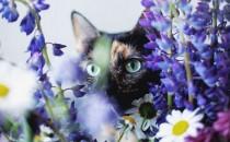 A Summer With A Cat – Câu Chuyện Chú Mèo Mùa Hè