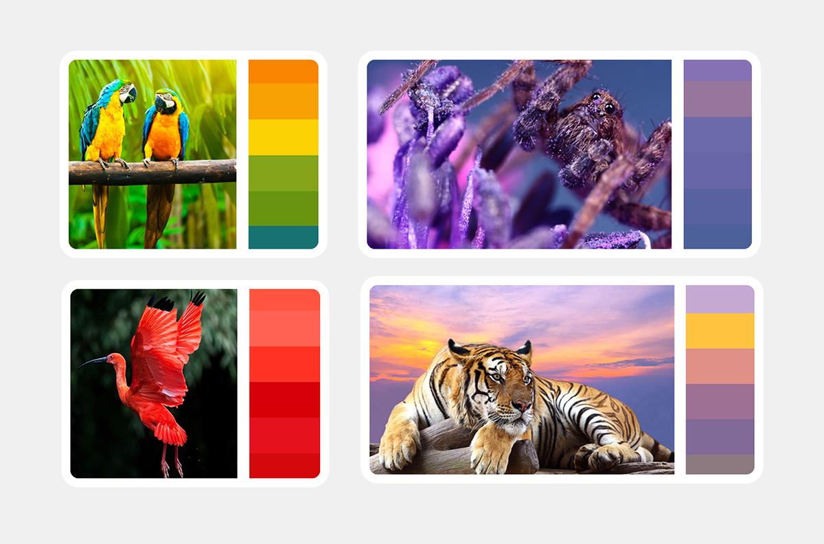 rgb.vn_qua-trinh-lam-nen-bo-nhan-dien-thuong-hieu-vinpearl-safari-zoo_04
