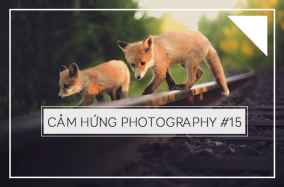 Cảm hứng Photography #15