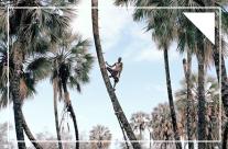 [Photography] Những người hái cọ