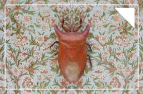 [Photography] Những chú bọ chân đốt của Claire Rosen