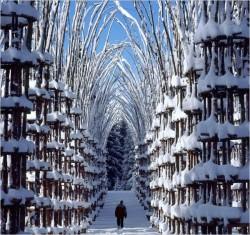 Khu rừng nghệ thuật ở Ý