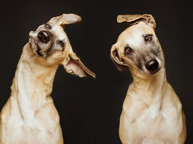 RGB_vn_photography_Dog-Portraits-by-Elke-Vogelsang1