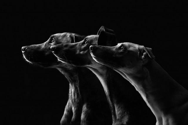 RGB_vn_photography_Dog-Portraits-by-Elke-Vogelsang3