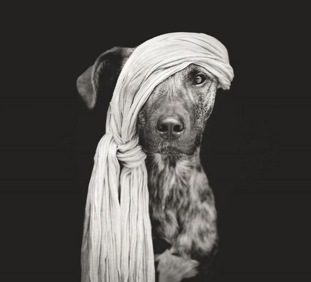RGB_vn_photography_Dog-Portraits-by-Elke-Vogelsang4