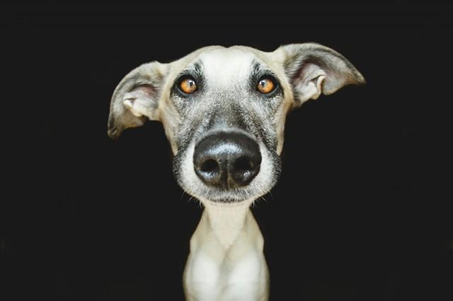 RGB_vn_photography_Dog-Portraits-by-Elke-Vogelsang7