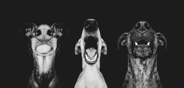 RGB_vn_photography_Dog-Portraits-by-Elke-Vogelsang9