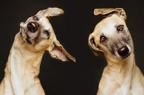 Chân dung ngộ nghĩnh từ những chú chó của Elke Vogelasang