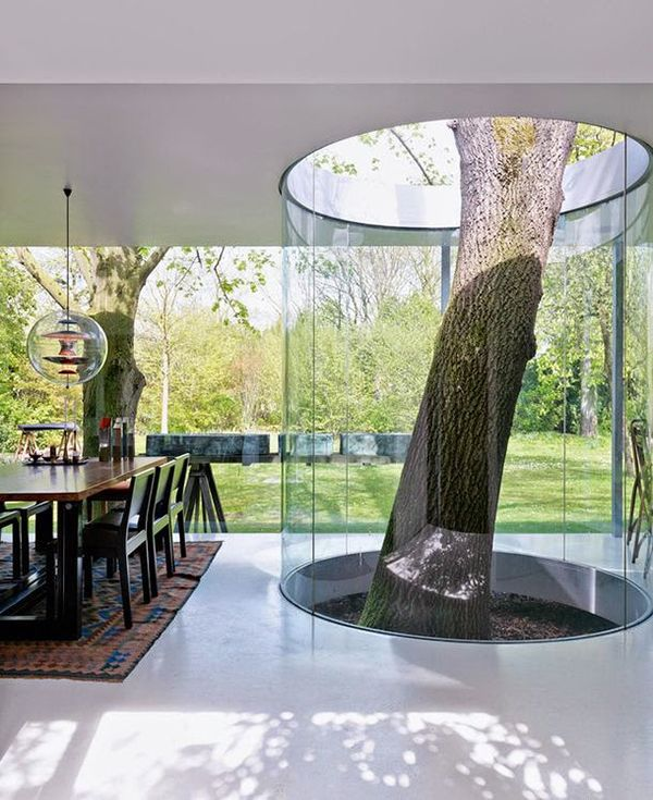 tree-inside-the-house-interior-climate-controlled