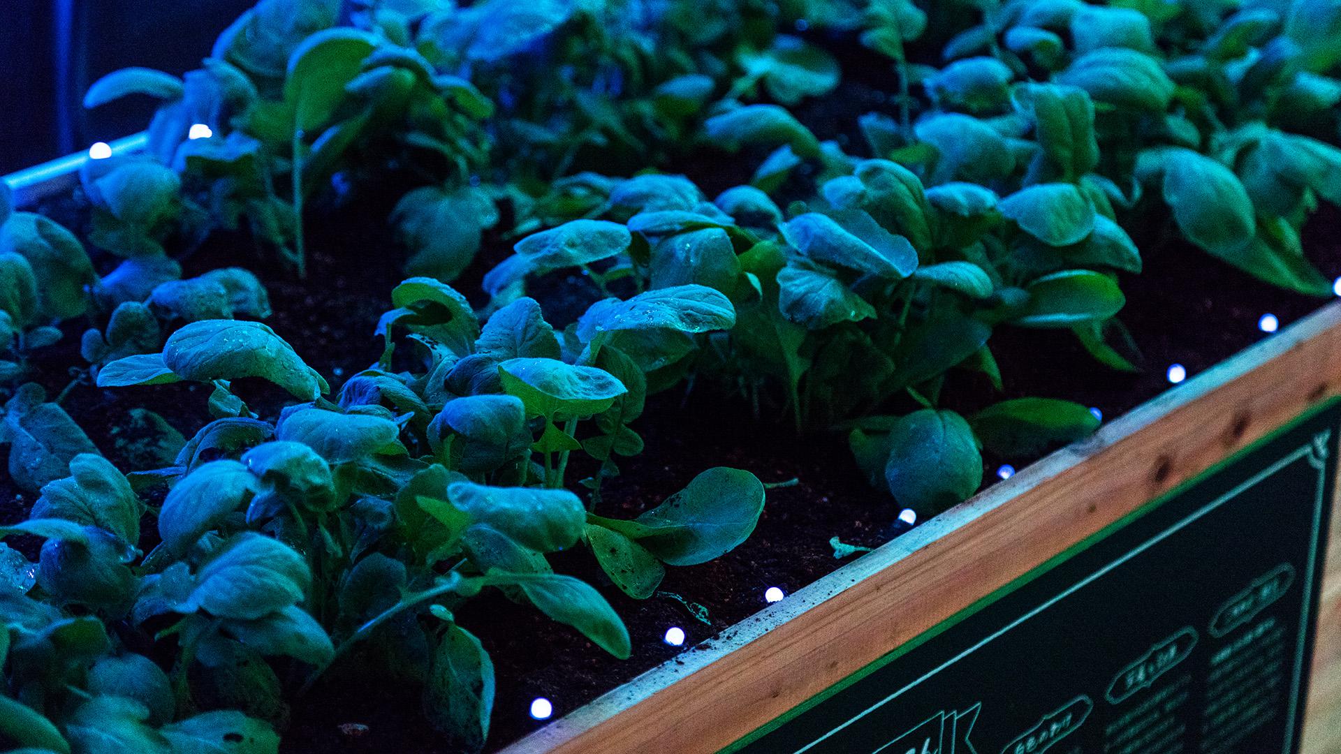 rgb_creative_ideas--digital-vegetable-japan-greenhouse-03