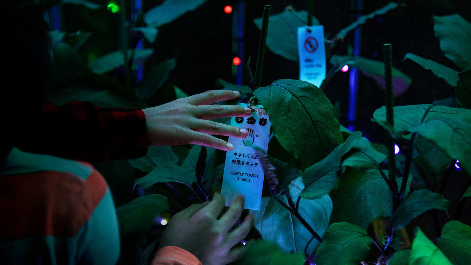 rgb_creative_ideas--digital-vegetable-japan-greenhouse-07