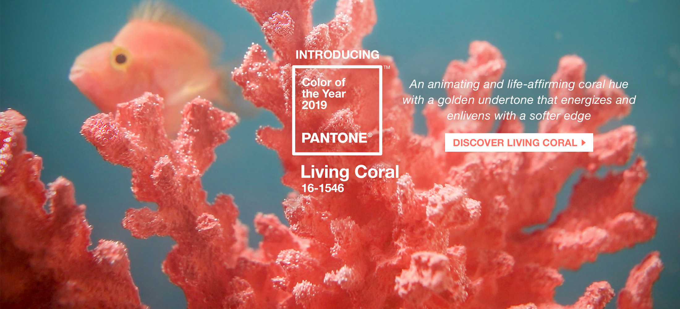 rgb-creative-ideas-pantone-color-of-the-year-2019-living-coral-homepage